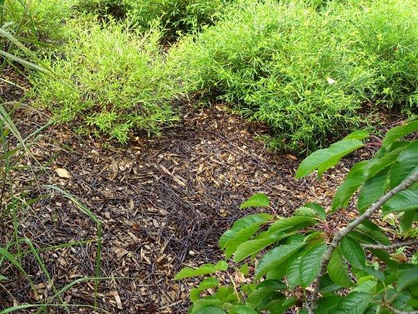 mulchen tegen slakken